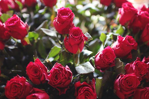 Букет от рози, как се извършва професионално засаждане на цветя