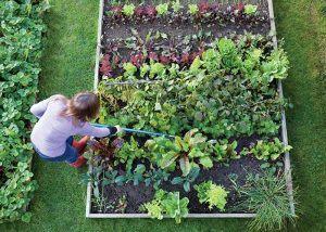 Начинаещ градинар