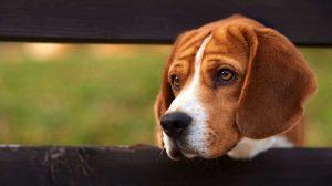 Могат ли съседите да ви забранят да гледате куче