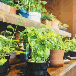 Монстера - най-елегантното растение за дома