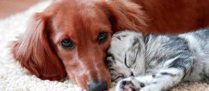Косми от куче и котка по мебелите