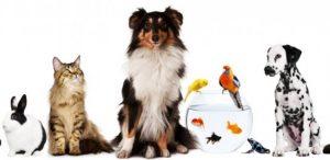 ДОмашни животни за игра с деца
