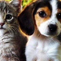 Осиновяване на котки